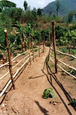 Path through banana plantation