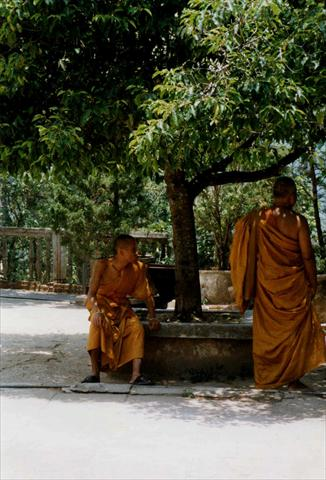 Monks resting under the tree