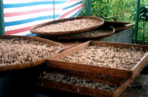 Silkworm production